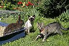 Kaninchen mit Katzen