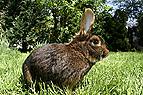 Kaninchen Auslauf