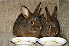 Kaninchen bekommen Futter