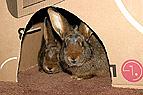 Kaninchen in Schachtel