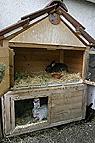 Kaninchen im Stall