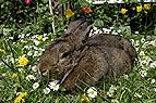 Kaninchen in Blumenwiese..
