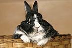Kaninchen sitzt in einem..