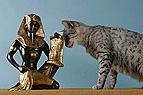 Ägyptische Mau