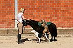 Zirkuslektionen mit Pony..