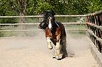 Pferd galoppiert auf ein..