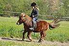Mädchen reitet Mini-She..
