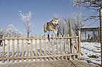 Hund springt über Zaun
