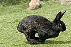 Kaninchen hoppelt über ..