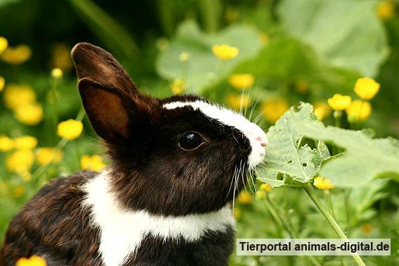 Kaninchen frisst - a-d2006_1488