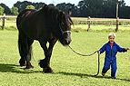Junge führt Pferd von d..