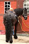 Mädchen liegt auf Pferd..