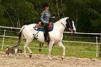 Horse & dog Trail