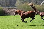 Bockendes Pferd