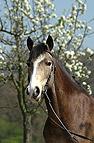 Pony Portrait im Frühli..