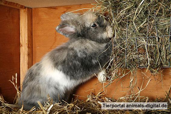 Kaninchen frisst - a-d2008_0666