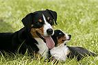 Hundemutter mit Welpe