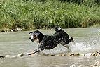 Hund rennt durchs Wasser