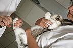 Kaninchen beim Krallen s..