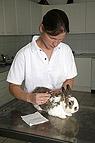 Kaninchen bei der Fellko..