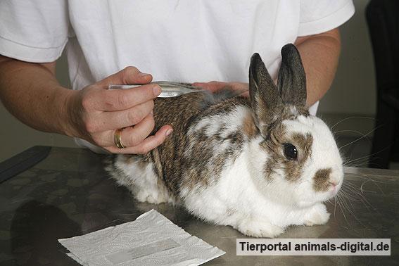 Kaninchen bei der Fellkontrolle - a-d2008_1457
