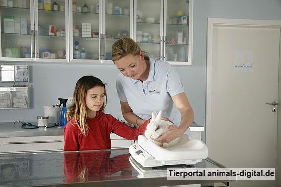 Tierärztin wiegt Kaninchen - a-d2008_2931