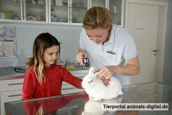 Kaninchen beim Tierarzt - a-d2008_2932