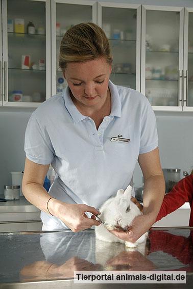 Krallenpflege beim Kaninchen - a-d2008_2943