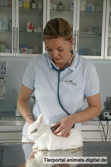 Herzuntersuchung beim Kaninchen - a-d2008_2946