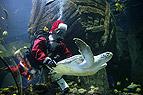 Weihnachtsmann im Aquari..
