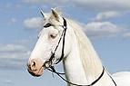 Cremellofarbenes Pony