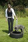 Hundeerziehung mit Welpe