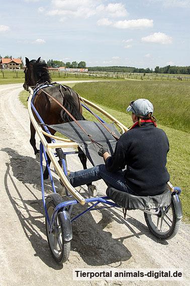 Traber - a-d2009_1167