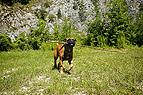Hund apportiert Stöckch..