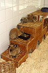 Kaninchen im Tierheim