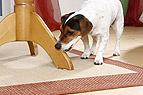 Hund knabbert Tisch an
