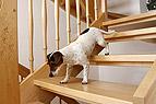 Hund geht Treppe runter