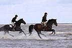 Pferde galoppieren ins W..