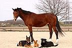 Pferd und Hunde