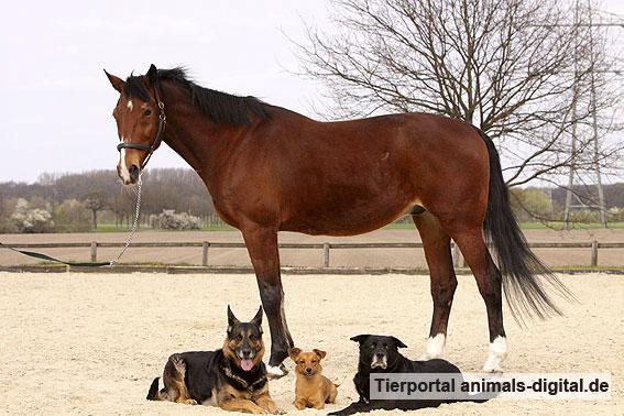 Pferd und Hunde - a-d2009_3915
