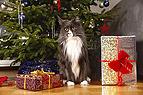 Katze vorm Christbaum