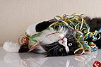 Katze spielt mit Luftsch..