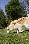 Hund riecht