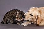 Hund gibt Katze Bussi