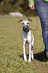 Hundespaziergang mit Mau..