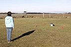 Obedience mit Hund