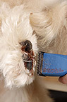 Hund beim Scheren