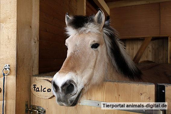 Pferd im Stall - a-d2012_0099