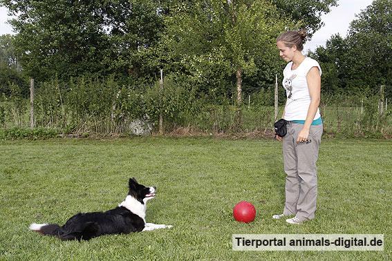Ballspiele mit Hund - a-d2012_0507