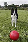 Ballspiele mit Hund